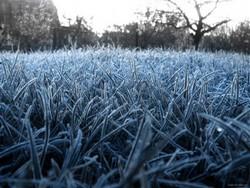 Заморозки і дощі